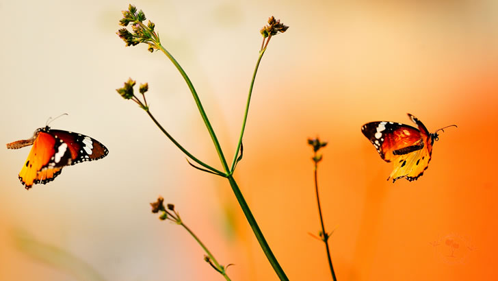 Kelebekleri itmeyin! Edebi Yazı